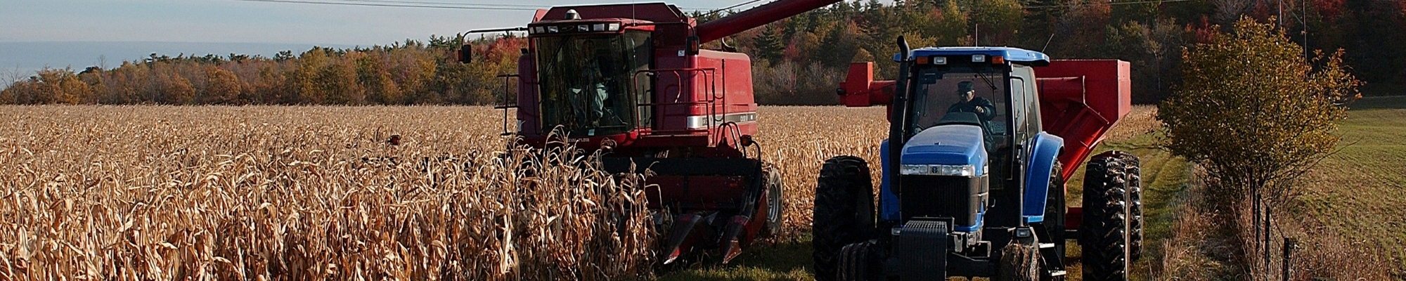 What is Crop Insurance?