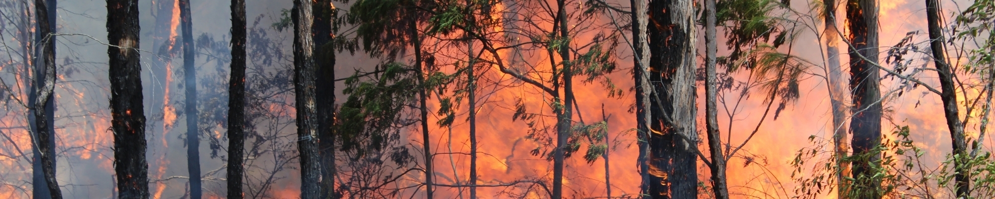 Preparing your business this bushfire season