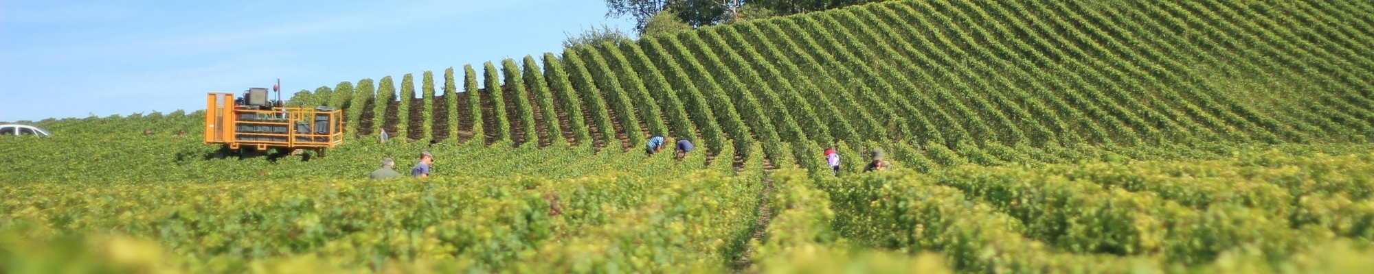 Taking the risks out of the winery business